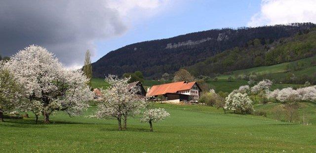 Gemeindehof_1.jpg