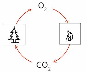 Grafik_Kreislauf_Holzenergie.png