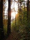 Wald_klein.jpg